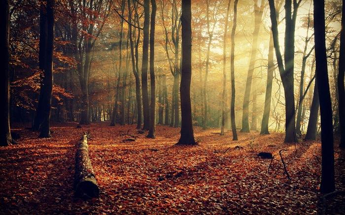 Rojo hojas de otoño bosque árboles HD wallpaper #10 - Fondo de ...