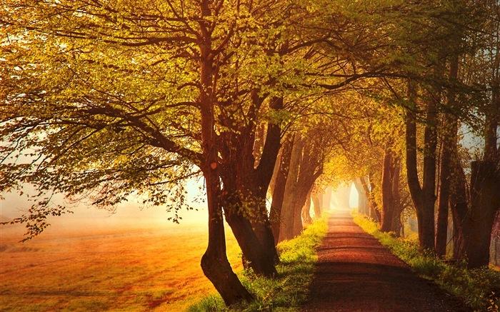 秋季红叶森林树木 高清壁纸19 - 壁纸预览 - 风景壁纸