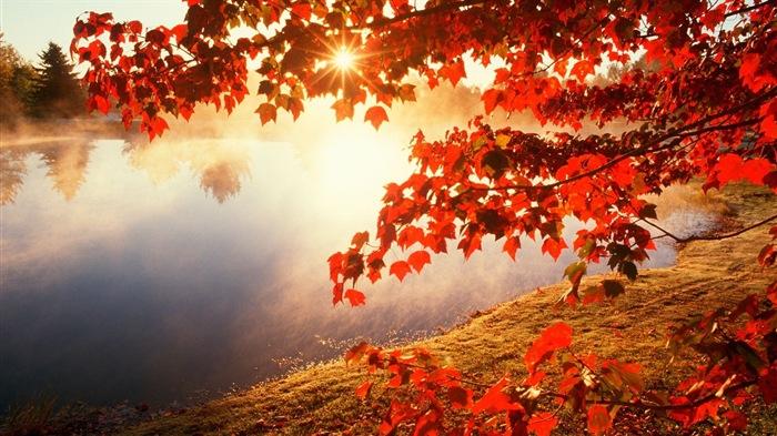 http://www.v3wall.com/wallpaper/medium/1311/medium_20131106010612458859.jpg
