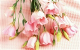 Flower Desktop Wallpaper Selection (2)
