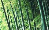 Green bamboo wallpaper #2