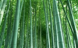 Green bamboo wallpaper #3