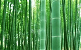 Green bamboo wallpaper #4