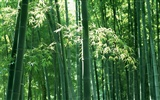 Green bamboo wallpaper #6