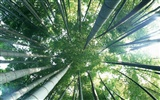 Green bamboo wallpaper #7