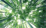 Green bamboo wallpaper #8