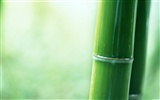 Green bamboo wallpaper #10
