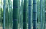 Green bamboo wallpaper #15