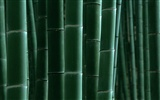 Green bamboo wallpaper #16