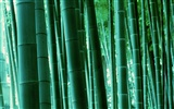 Green bamboo wallpaper #17