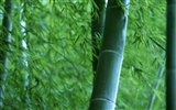 Green bamboo wallpaper #19