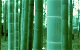 Green bamboo wallpaper #20