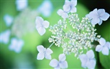 Soft Focus Flower Wallpaper
