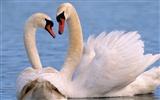 """Предпросмотр схемы вышивки  """"лебеди """". лебеди, любовь, птицы."""