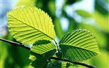 Cool green leaf wallpaper