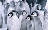 Foto von Penguin Animal Wallpapers