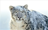 Apple Snow Leopard wallpaper par défaut plein #21