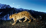 Apple Snow Leopard wallpaper par défaut plein #23