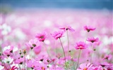 Fresh style Flowers Wallpapers #23