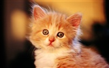 HD Wallpaper cute cat Foto