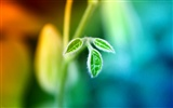 Widescreen HD wallpapers Plants