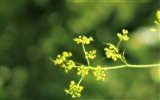 Widescreen HD wallpapers Plants #22