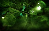 Widescreen HD wallpapers Plants #29