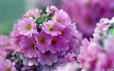 Personal Flowers HD Wallpapers #21