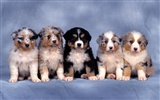 Puppy Photo HD wallpapers (1) #2