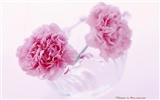 Mother's Day of the carnation wallpaper albums #33