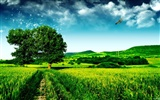 HD Widescreen Landscape Wallpapers