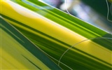 Foreign photography green leaf wallpaper (2) #6