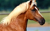 Horse Photo Wallpaper (2)