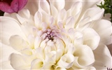 Large Flower Feature Wallpaper (4) #18