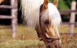 Horse Photo Wallpaper (3)