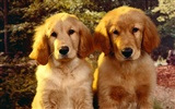 Puppy Photo HD wallpapers (2)