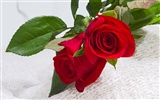 Large Rose Foto Wallpaper (1)