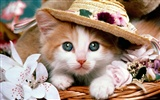 1600 Cat Photo Wallpaper (2)
