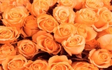 Large Rose Photo Wallpaper (2) #3