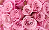 Large Rose Photo Wallpaper (2) #4