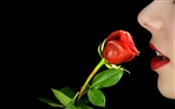 Large Rose Photo Wallpaper (2) #8