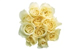 Large Rose Photo Wallpaper (2) #11