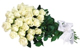 Large Rose Photo Wallpaper (2) #12