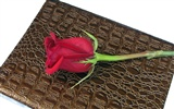 Large Rose Photo Wallpaper (2) #13