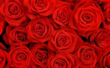 Large Rose Photo Wallpaper (2) #16