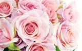 Large Rose Photo Wallpaper (2) #20