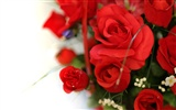 Large Rose Photo Wallpaper (4) #2