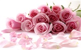 Large Rose Photo Wallpaper (4) #6