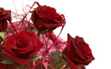 Large Rose Photo Wallpaper (4) #12
