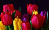 Large tulip wallpaper (1)
